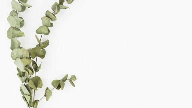 Ramoscelli secchi su sfondo bianco