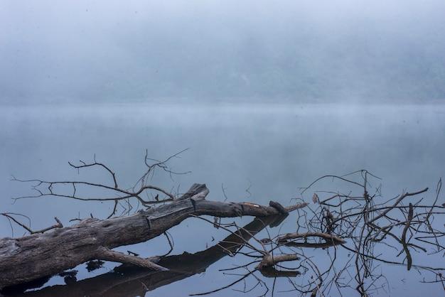 Dry wood on the foggy lake