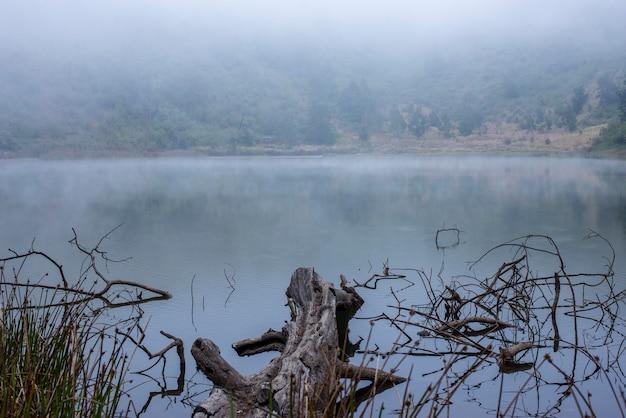 Dry wood and foggy lake