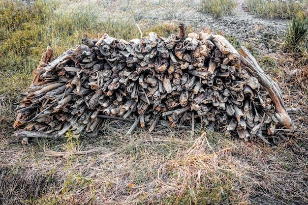 Сухие деревянные ветки сложены среди сорняков
