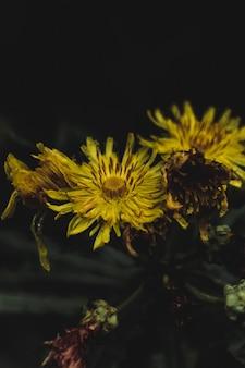 森の真ん中にある乾燥した黄色の顕花植物