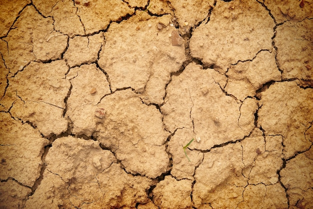 Сухая желтая почва в пустыне. текстура для фона