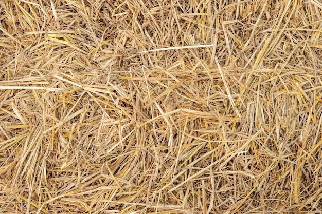 Dry yellow straw grass background texture closeup wallpaper.