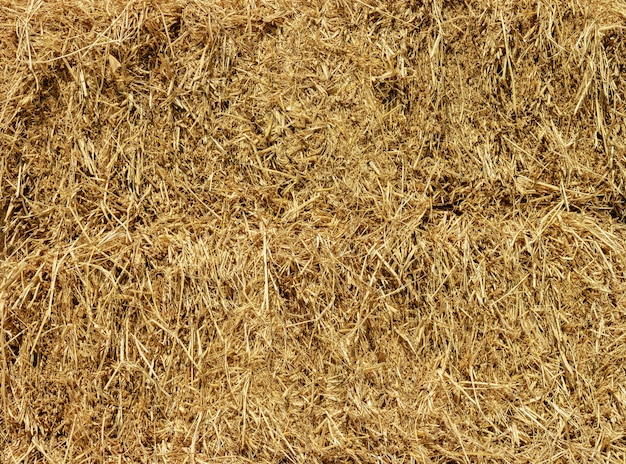 Dry yellow straw grass background texture wallpaper.