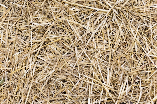 Dry yellow straw grass background texture