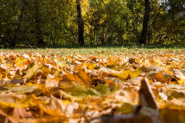 Dry yellowed foliage of trees