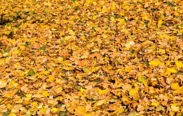 Сухая пожелтевшая листва