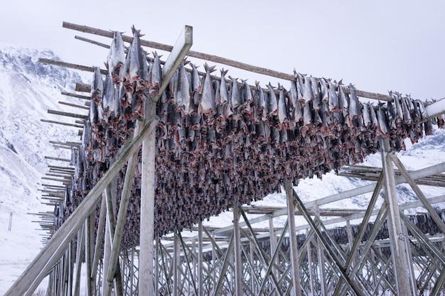 Drying racks for fish stock