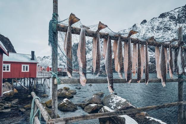 노르웨이 nusfjord 어촌 마에서 건어물 대구 건조