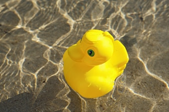 Duck of toy in the swimming pool