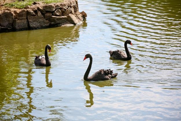 Утка на пруду в зеленой природе