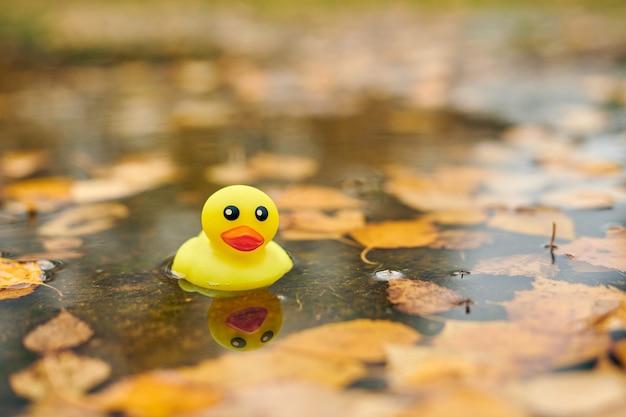 葉と秋の水たまりのアヒルのおもちゃ。都市公園の秋のシンボル。