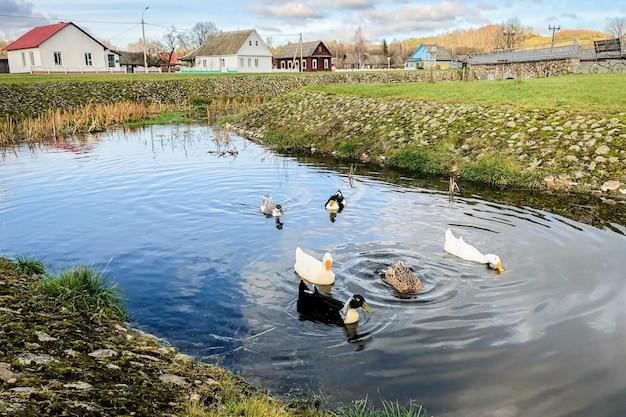 Ducks near pond in autumn park.