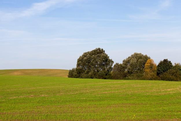 空を背景に緑の植生を持つ鈍い農地