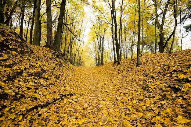 自然の中で秋の季節の鈍い天気、地球は濃いオレンジ色の葉で覆われています、本物の自然
