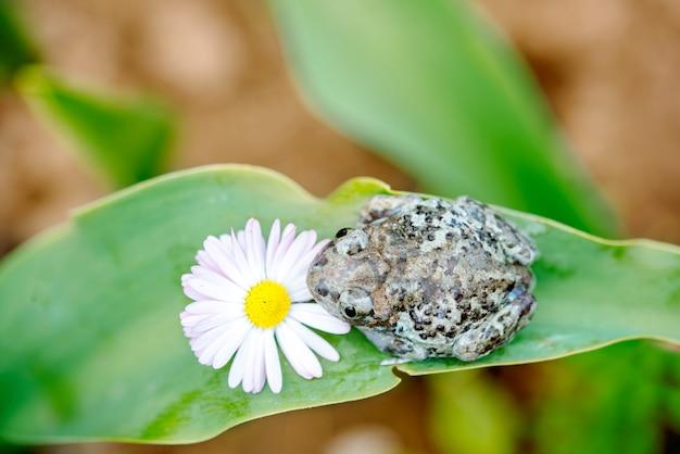 花の上に座ってダンピーカエル。美しい夏のカード。庭の害虫。