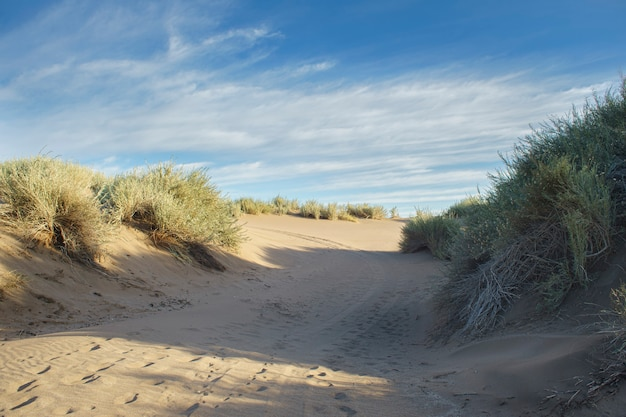 Dune on the beach with native vegetation and footprints of people