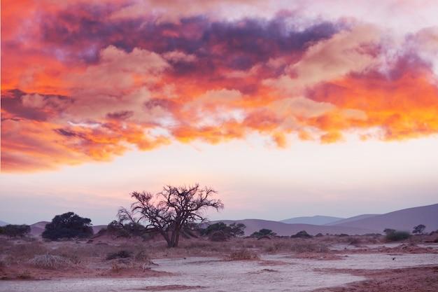ナミブ砂漠、デッドヴレイ、ソーサスフライ、ナミビア、アフリカの砂丘と枯れたアカシアの木。有名な観光地