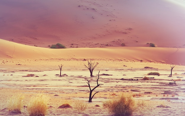 Dunes and dead acacia trees in the namib desert, dead vlei, sossusvlei, namibia, africa. famous touristic destination