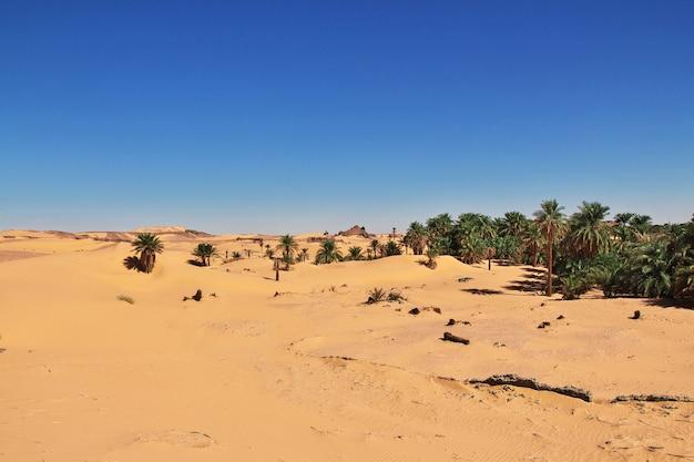 Dunes of sands in sahara desert