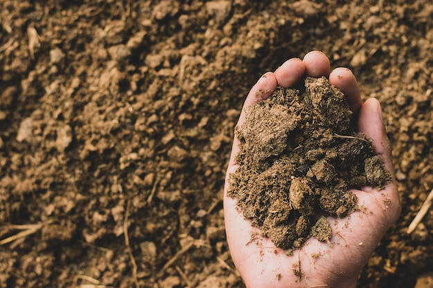 Dung or manure in the hands.