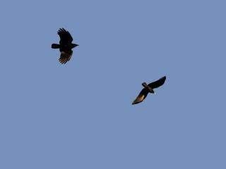 Duo in flight