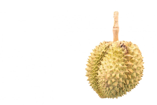 Durian fruit on white background