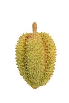 ドリアンは、白い背景で隔離されました。タイの果物の王様。クリッピングパス