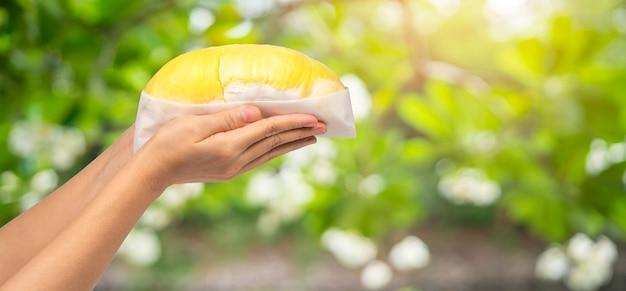 自然農場、おいしい有機黄色いおいしいドリアン、健康的な食事の概念を保持している女性のドリアン。