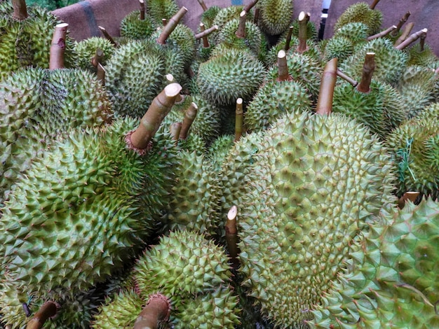 Durian, thai fruit king, is exporting to china