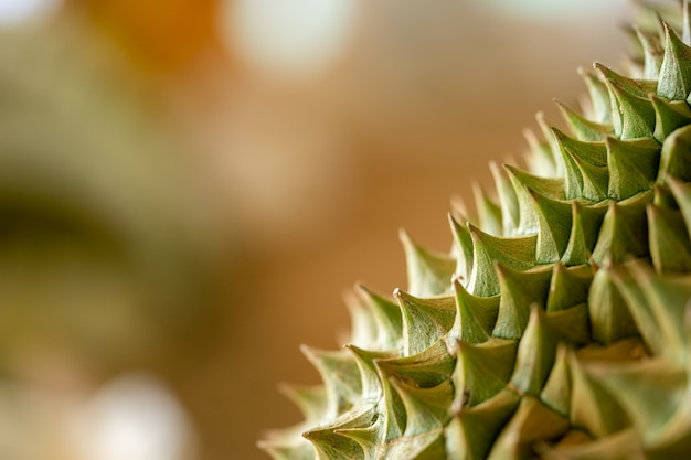 Durian thorns close up are seen near the details clearly.
