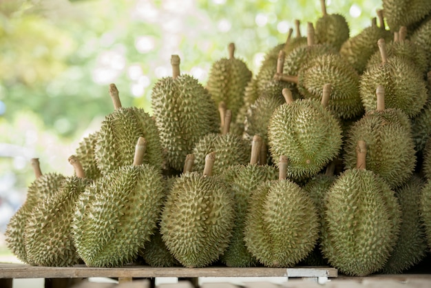 A durian tree in the garden,durian is king of fruits in asia thailand