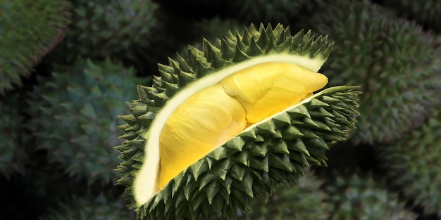 Durian tropical fruit