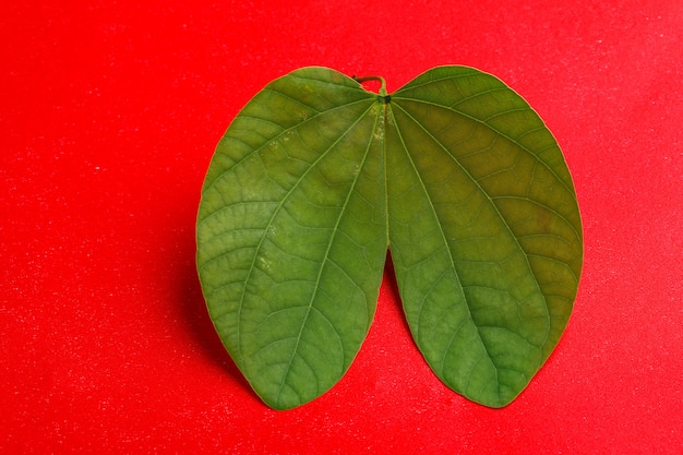 Dussehra leaf