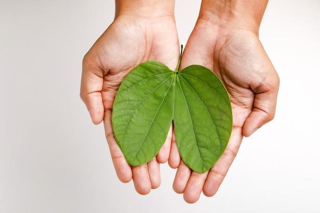 手に緑の葉と幸せこれdussehra