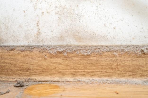 部屋の隅にあるほこり。アパートの家の白い壁、幅木、木の床にある本物の古い無視されたほこりっぽい汚れ、汚れた有毒なカビや真菌の細菌がクローズアップ