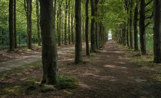 Dutch rural nature
