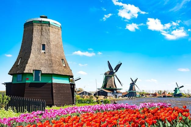 네덜란드의 전형적인 풍경입니다. 네덜란드 잔세스칸스(zaanse schans) 마을의 튤립 꽃밭이 있는 강 근처의 푸른 하늘, 집이 있는 전통적인 네덜란드 풍차. 유명한 관광지.