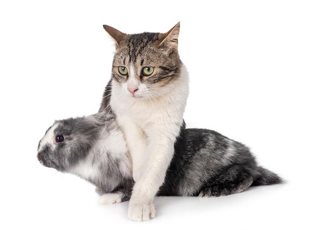 Dwarf rabbit and cat