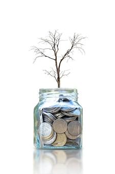 흰색 배경에 고립 된 돈을 절약하기 위해 병에 죽어가는 마른 나무