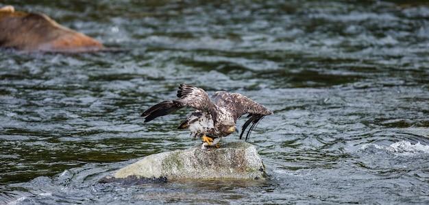 독수리는 발톱에 먹이가있는 돌에서 날아갑니다.