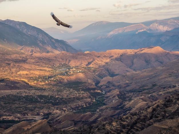 ワシは山の谷を飛び越えます。大きな岩山と壮大な深い峡谷のシルエットとカラフルな晴れた朝の風景。