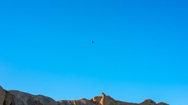 岩の上を飛んでいるワシ