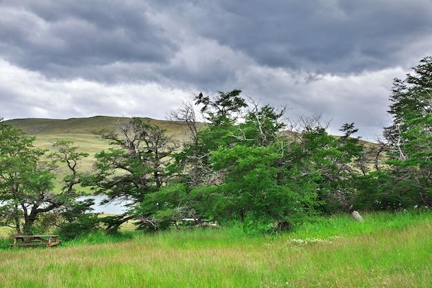 Орел в национальном парке торрес-дель-пайне, патагония, чили