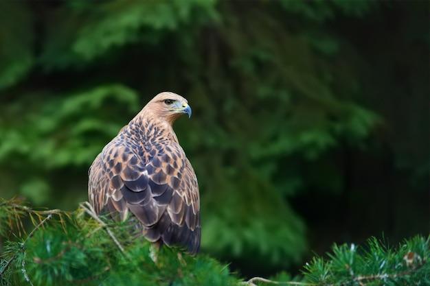 Орел на ветке в лесу