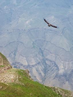 峡谷の上のワシ。世界中を旅してください。垂直方向のビュー。