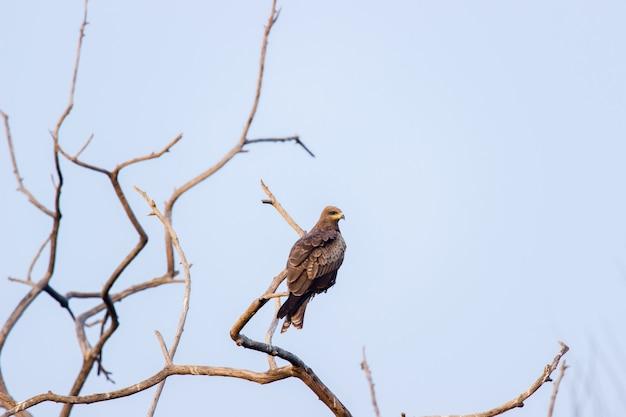 長い飛行の後、イーグルは木の上に腰掛けた