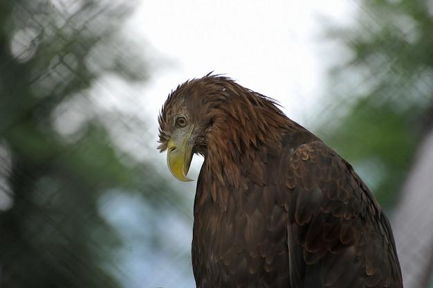 Орел сидит на размытом фоне