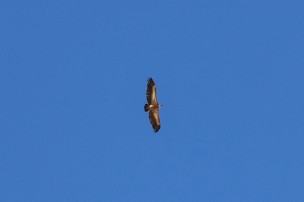 The eagle in the sky in mountains, yemen