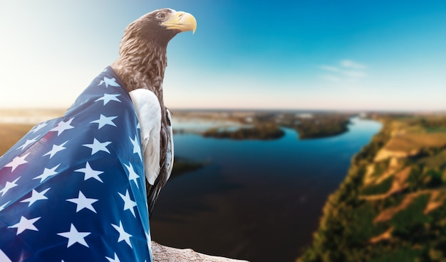 Eagle with american flag on sunset river background